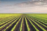 Natura inspiruje: innowacje w hodowli roślin