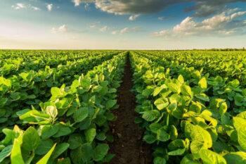 Czy gospodarstwo ekologiczne się opłaca?