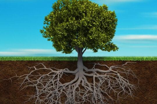 Mykoryza: jakie są podziemne relacje roślin?