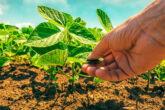 Precyzyjna ochrona upraw rolniczych