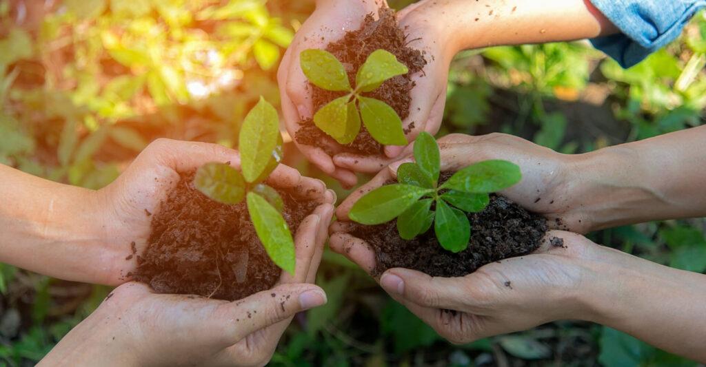 gospodarstwo ekologiczne