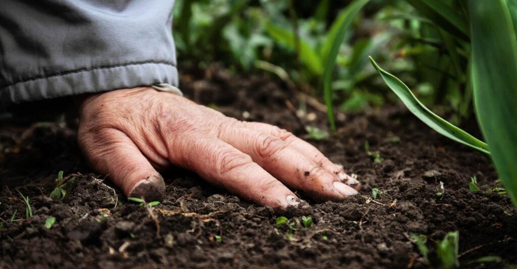 uszlachetnianie gnojowicy i obornika plocher