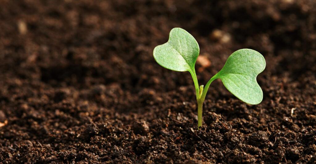 ekologiczne nawozy do gleby plocher